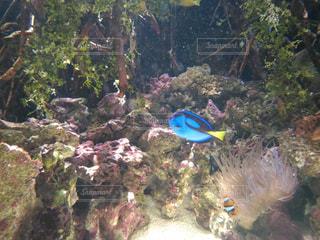 熱帯魚 - No.208538