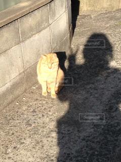 猫 - No.208591