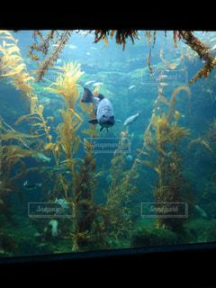 海の中の写真・画像素材[208604]