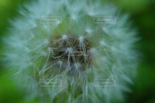 近くの葉のアップの写真・画像素材[851855]