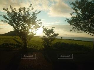 木の間から射す太陽の光の写真・画像素材[4683768]