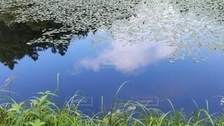 池に反射する雲空の写真・画像素材[4683929]