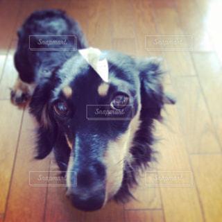 犬の写真・画像素材[232633]
