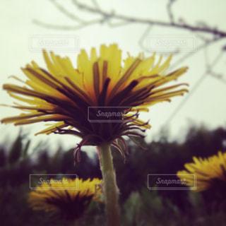 自然の写真・画像素材[232635]