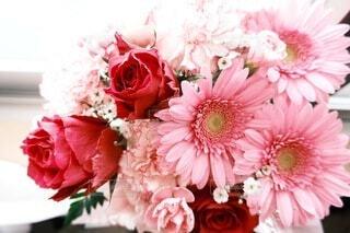 ピンク花の写真・画像素材[4688424]