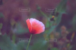 花のクローズアップの写真・画像素材[4688428]