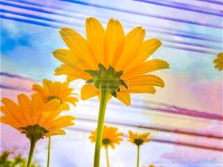 黄色い花の写真・画像素材[4688851]