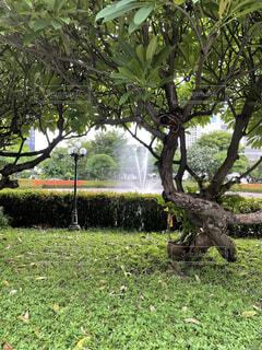 Fountain in Bangkokの写真・画像素材[4791541]