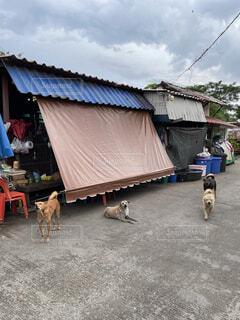 Dog Shelter in Thailandの写真・画像素材[4801300]