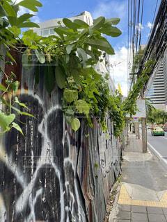 Surasak in Bangkokの写真・画像素材[4806650]
