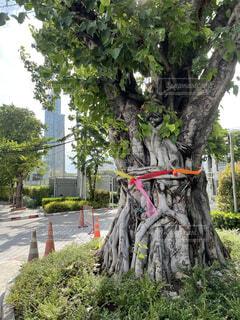 Charoen Krung road in Bangkokの写真・画像素材[4834160]