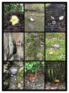 自然の写真・画像素材[261656]