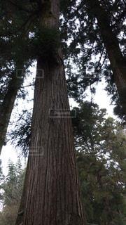 森林の写真・画像素材[302447]