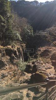 森林の写真・画像素材[306353]