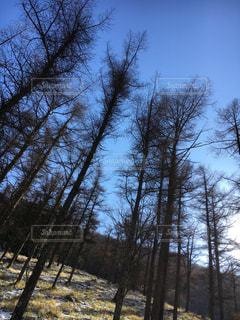 森林 - No.306363