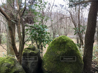 森林 - No.337736