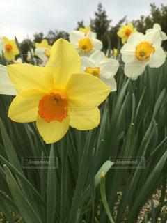花の写真・画像素材[375371]