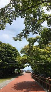小豆島の写真・画像素材[598362]