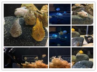 須磨水族館の写真・画像素材[643150]