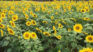 夏の写真・画像素材[652525]