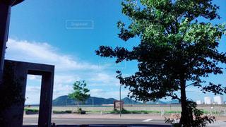 建物の前にツリーの写真・画像素材[715513]