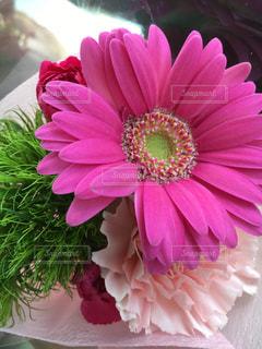 近くの花のアップの写真・画像素材[744250]