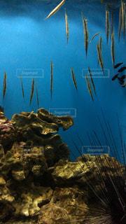 水の中の魚の写真・画像素材[744312]