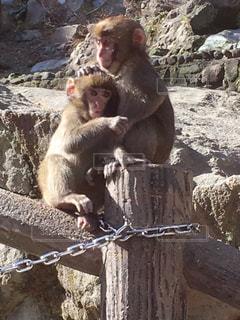 かわいいお猿!の写真・画像素材[744977]