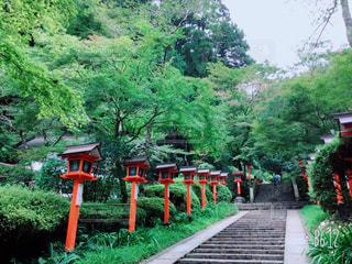京都!嵐山! - No.746674