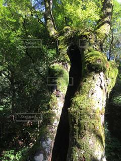 素敵な樹木に惹かれて撮りました。 - No.748030