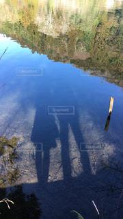 森を流れる川の写真・画像素材[751175]