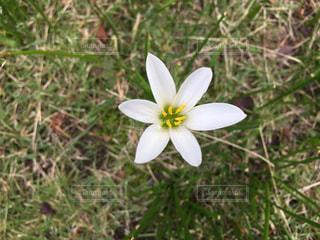 お散歩中に見つけた小さな小さなお花!の写真・画像素材[779914]