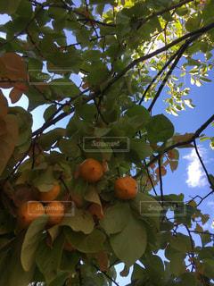 秋の味覚を発見しました!の写真・画像素材[794036]
