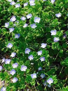 小さな草花が可愛くて撮りました!の写真・画像素材[1058185]