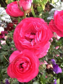 お花!の写真・画像素材[1082283]