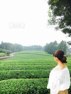 茶畑と私です!の写真・画像素材[1306703]