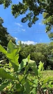 森の中の夏空の写真・画像素材[4697874]