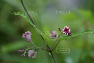 野の小花 つるの小花赤と白のかわいい模様の写真・画像素材[4701035]