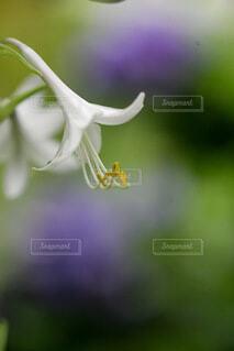 白い花火のクローズアップの写真・画像素材[4703219]