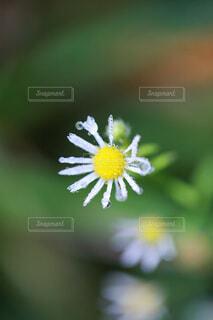 白い花のクローズアップの写真・画像素材[4703223]