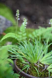 庭先の白い小花の写真・画像素材[4704232]