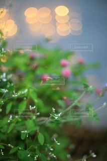 小花のクローズアップ ライトの光の写真・画像素材[4717108]