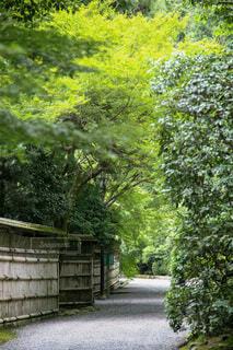 竹柵のある風景の写真・画像素材[4762277]