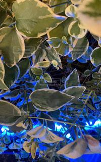 青いライトに染まる植物の写真・画像素材[4773517]