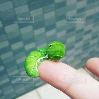 昆虫、幼虫の写真・画像素材[4707087]