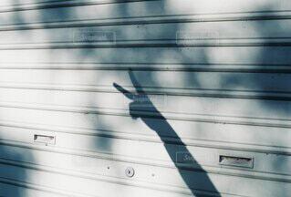 木漏れ日の中ピースサインの写真・画像素材[4696393]