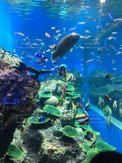 魚の写真・画像素材[227154]