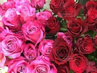 プロポーズの花束の写真・画像素材[4695539]