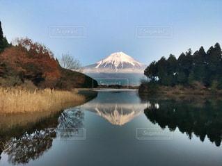田貫湖からの富士山の写真・画像素材[274051]
