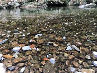 水の体の横にある岩の上に座って鳥の群れの写真・画像素材[861990]